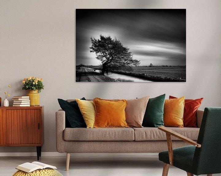 Beispiel: Durch den Wind geformt. von John Verbruggen