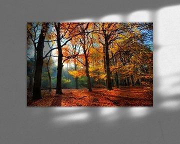 Spanderswoud Herfst van Dennis van de Water