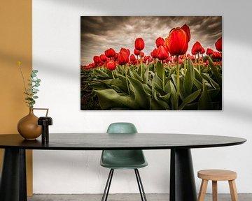 Tulpen - Rood van Edwin van Wijk