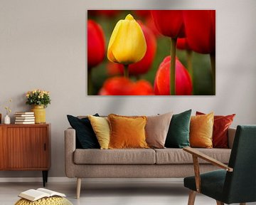 Tulpen - Standing out van Edwin van Wijk