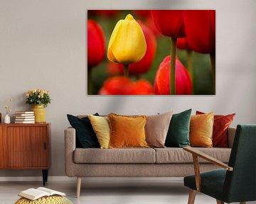 Tulpen - Standing out von Edwin van Wijk
