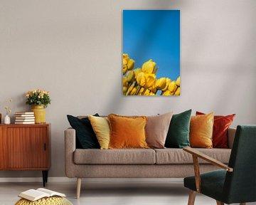 Gele Tulpen 002 van Alex Hiemstra