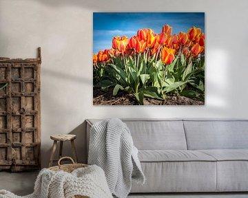 Oranje Rode Tulpen 001 van Alex Hiemstra