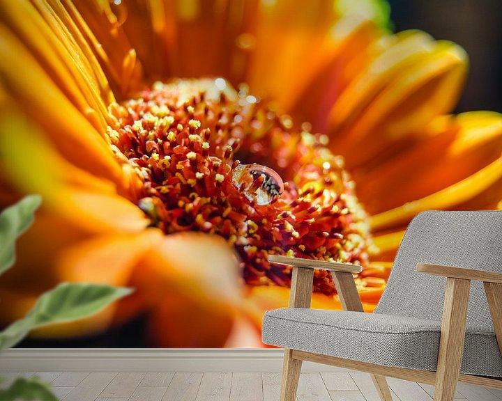 Sfeerimpressie behang: Oranje Gerbera met waterdruppel van Ricardo Bouman