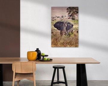 Olifant in de Ngorongoro-krater van Paul Jespers