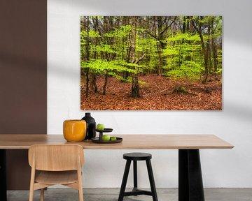 Lente bos van Fotografie Egmond