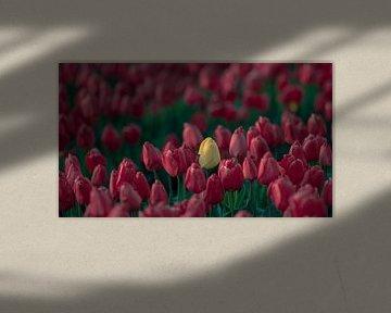 Gele tulp van Bastiaan Schuit