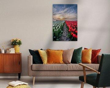 tulpen bij ondergaande zon 04 van Arjen Schippers
