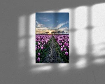 tulpen bij ondergaande zon 05 van Arjen Schippers