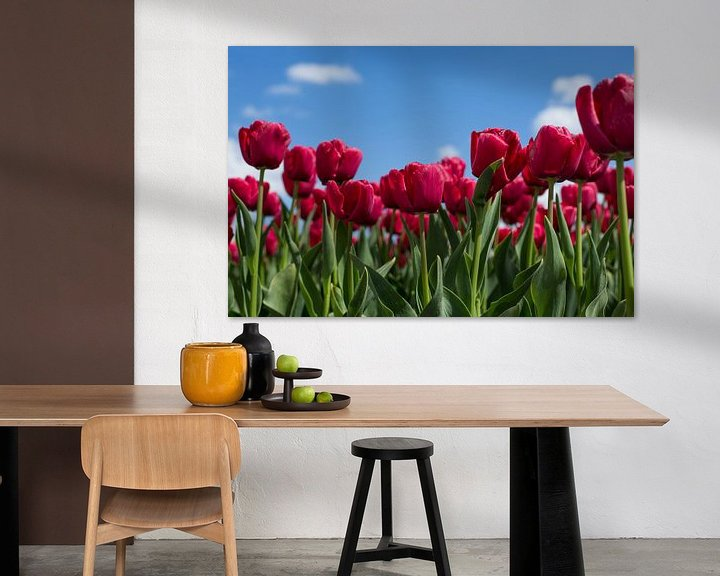 Sfeerimpressie: Hollandse tulpen van Saskia Bon