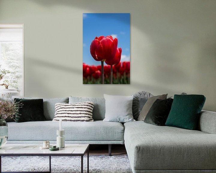 Sfeerimpressie: Rode tulpen van Saskia Bon