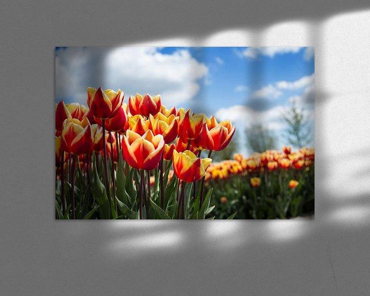 Sfeerimpressie: Tulpenveld van Saskia Bon