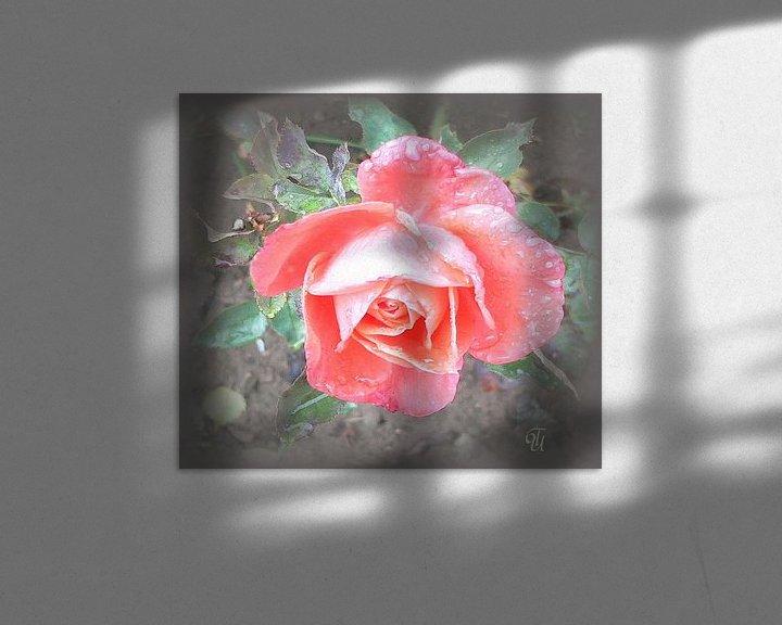 Impression: zarte Rose sur Thea Ulrich / UtheasArt