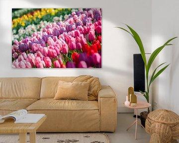 Tulpen van Jelmer Jeuring