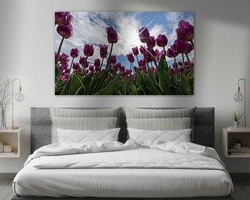Tulpen en Hollandse luchten.. van Miranda van Hulst