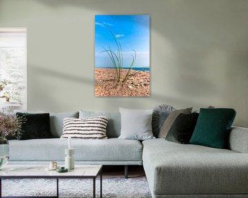 Atlantikküste 2 von Norbert Sülzner