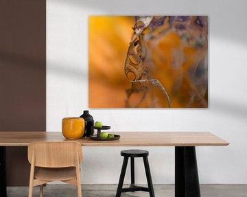 photography detail dead leafs sur Ester Besuijen