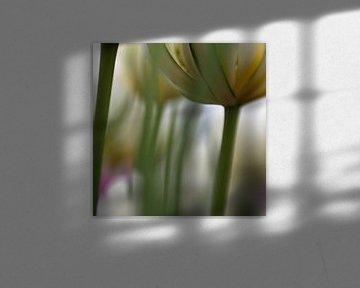 tulip sur Ester Besuijen