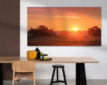 Veluwe  zonsopkomst panorama van Dennis van de Water