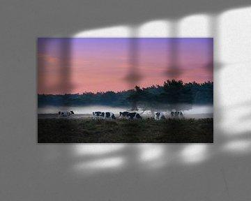 Koeien in de mist van Dennis van de Water