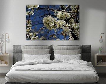 Lentebloesem, bloesem van Leo Langen
