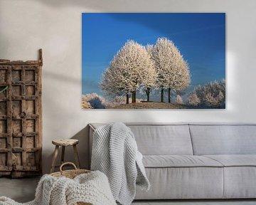 Trois arbres couverts de neige sur Yvonne Smits