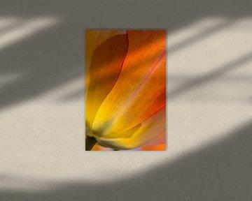 Orange tulp van Arjan van der Beek