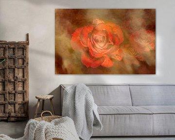 Rosen von hako photo