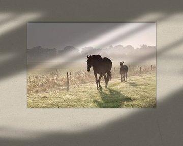 Walking in the mist von Olha Rohulya