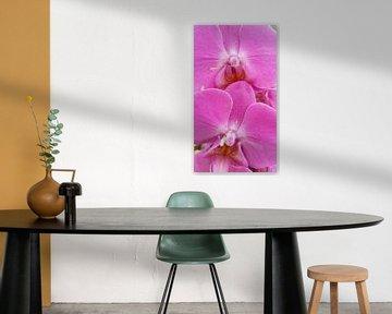 orchidee #5 von Lucas Joël Smeenge