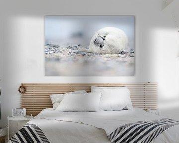 Zeehond  van Elles Rijsdijk