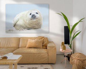 Zeehonden pup sur Elles Rijsdijk