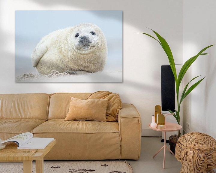 Impression: Zeehonden pup sur Elles Rijsdijk