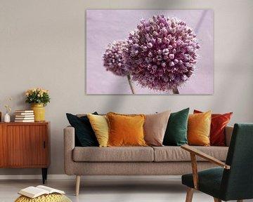 Roze bolvormige bloem, allium van Michèle Huge