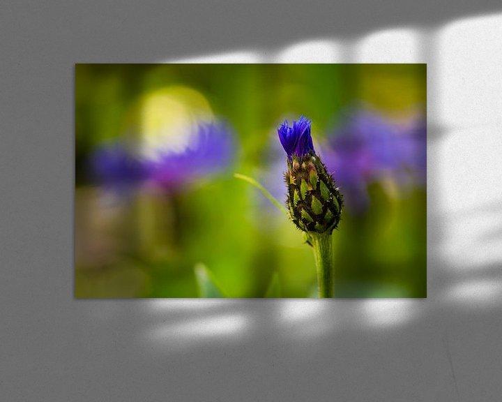 Sfeerimpressie: Cornflower 'Opening' van William Mevissen