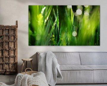 Green Fresh van Julia Delgado