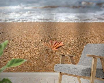 Shell in het zand van Norbert Sülzner