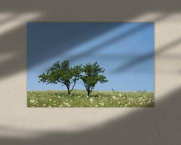 2 Bomen. van Jelmer Reyntjes