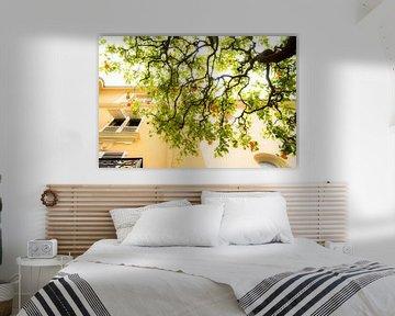 Sinaasappelboom in Monaco van Johan Kalthof