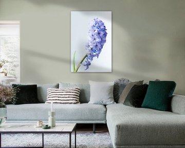 Hyacinth met waterdruppels von Deborah Peerdeman