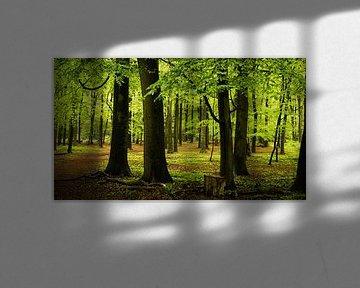 Regenachtig Bos in Lage Vuursche van Deborah Peerdeman