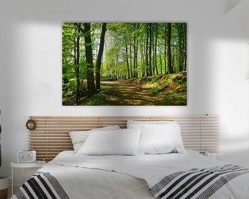 Frühlingswald am Hertasse von Ostsee Bilder