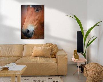 a horse van Yvonne Blokland