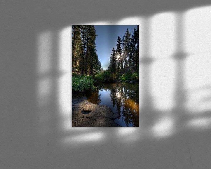 Sfeerimpressie: In het bos van de Sierra Nevadas van Wim Slootweg