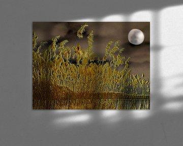 Mystische Nacht von Heidrun Carola Herrmann