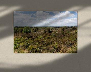 Sallandse heuvelrug panorama
