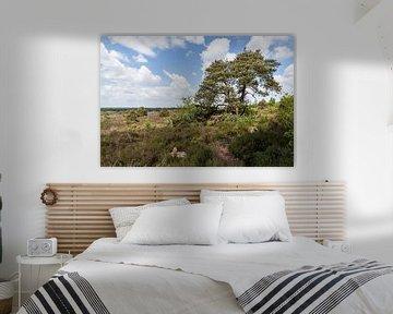 Sallandse heuvelrug panorama met boom