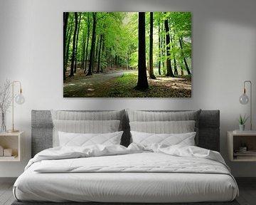 Frühlingswald von Ostsee Bilder