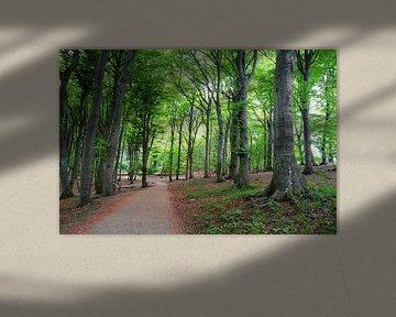 Traumwald von Ostsee Bilder
