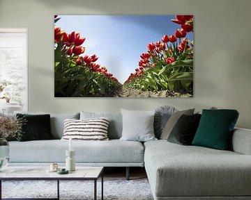 Tulip V van Sonny Dimaculangan